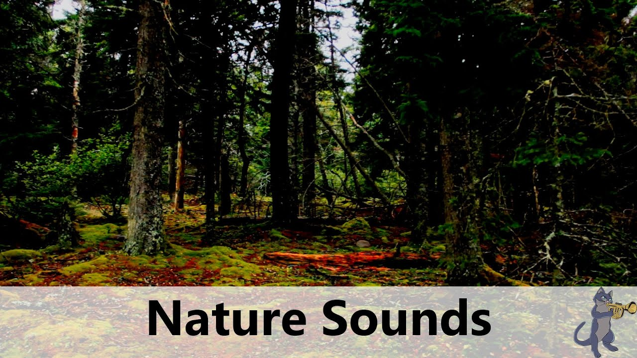 Tropical Island Beach Ambience Sound: Nature Sounds: Gentle Wind, Birds, Church Bells, Forest