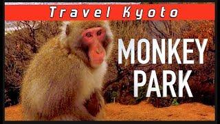 Iwatayama Monkey Park Kyoto - Japan SNOW MONKEYS! / Видео