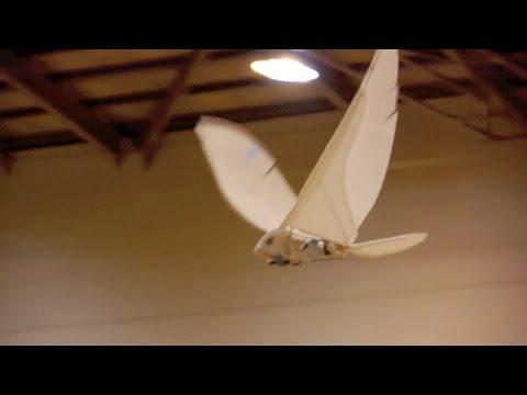 TB50 indoor Flight test