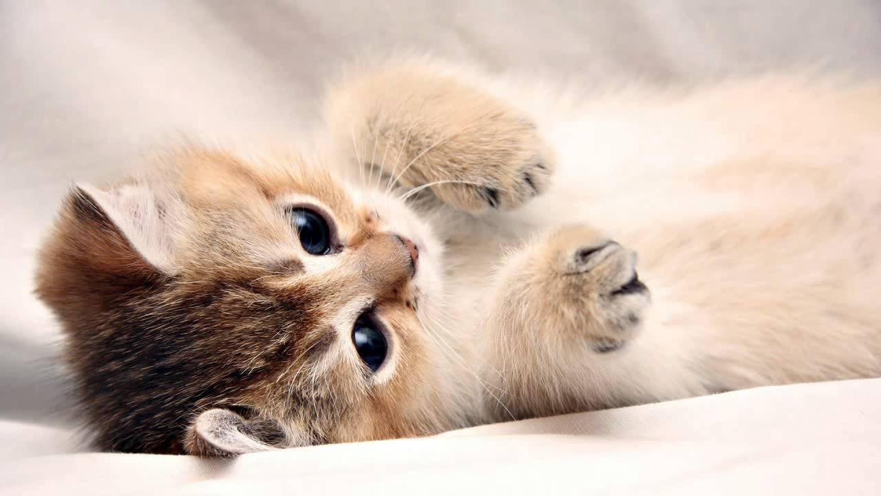 2 horas de som de gatos miando