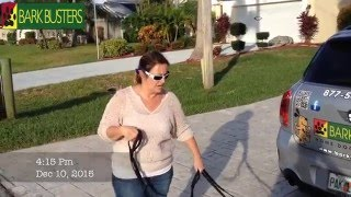 No Pulling on Leash  - Miniature Dachshunds - Dog Training of Fort Myers K9- Patrick Logue