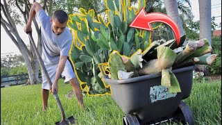 how-to-save-money-grow-your-own-food