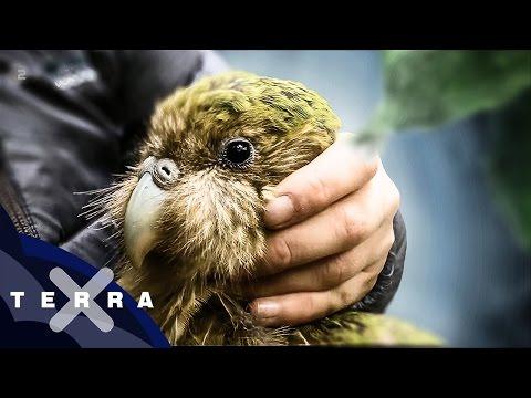 Kieling sucht den Kakapo | Andreas Kieling