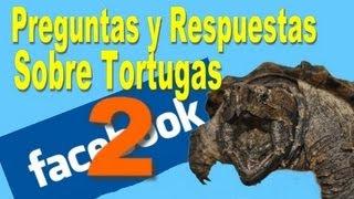 Preguntas y Respuestas de Tortugas 2 / SpyderÑa