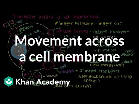 How do things move across a cell membrane? | Cells | MCAT | Khan Academy
