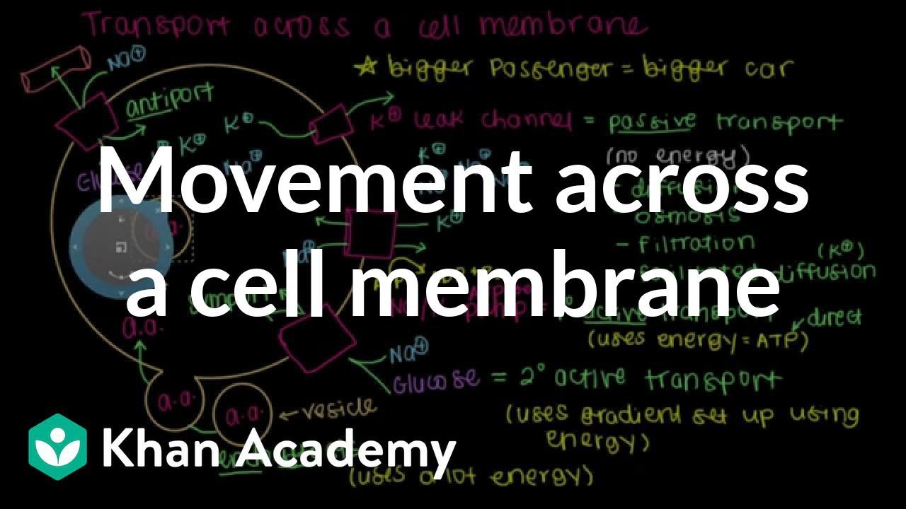 How Do Things Move Across A Cell Membrane Video Khan Academy