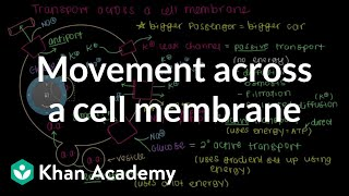 Repeat youtube video How do things move across a cell membrane? | Cells | MCAT | Khan Academy