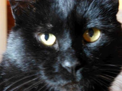 Was Tun, Wenn Die Katze Verstopfung Hat?