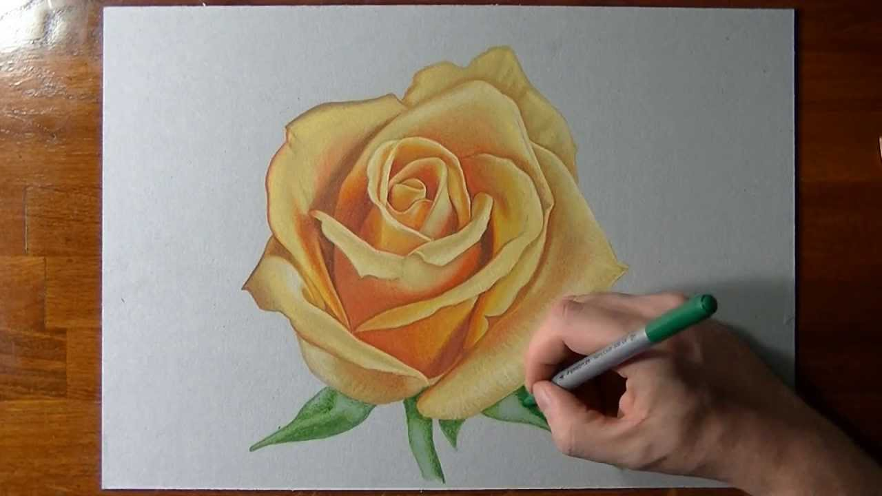How To Draw A Yellow Rose Youtube