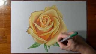 How I draw a yellow rose
