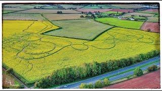 7 Million Sunflowers