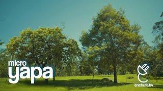 microYAPA: Árboles Conversando