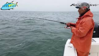 "Porgy & Seabass Jigging with Black Hole USA 6'9"" Challenger Bank 691UL Rod & IRT 400 Reel"