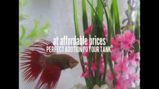 Freshwater Fish Tank Plants