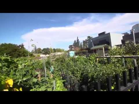 Living in Saratoga, CA Community Video | Presented by Coldwell Banker
