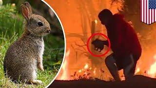 Rabbit rescue: Hero runs into burning bush to rescue wild bunny from California wildfire - TomoNews