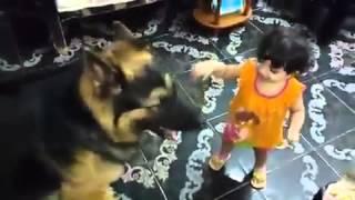 كلب يلعب مع طفل
