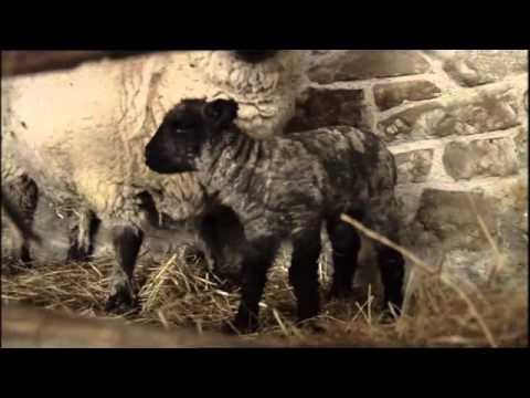 Download Victorian Farm Episode IV