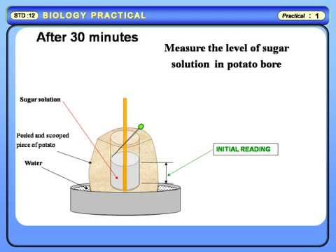 discussion on osmosis on a potato chip Introductionthe purpose of this experiment was to demonstrate osmosis osmosis is the diffusion of water across a selectively permeable membrane (bell et al 2004) osmosis is the movement of water molecules from an area of high concentration to an area.