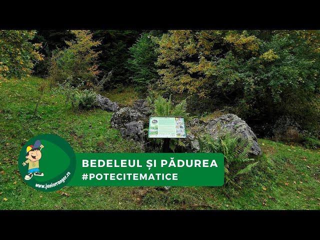 Pe poteci: pădurea din Bedeleu