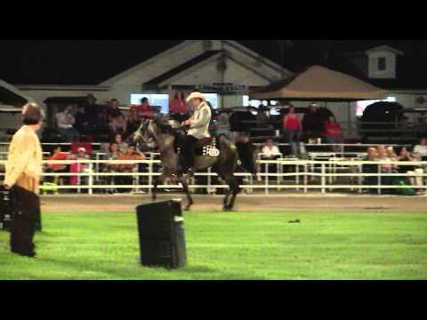 Ava 2010 Foxtrotter Open 3 Years Gelding/Stallions  World Championship -MFTHBA