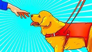 Если вы Увидели Собаку-Помощника без Хозяина, Не Проходите Мимо!