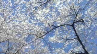 Musim Semi Korea 2013