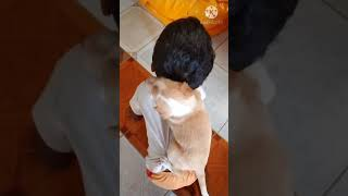 Dog cute videos/kids and dong video/#shorts/Funny videos/Dog cut