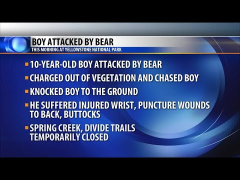 Boy attacked by bear in Yellowstone Park