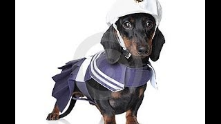 Dachshund Coats, Wiener Dog Jackets & Clothes