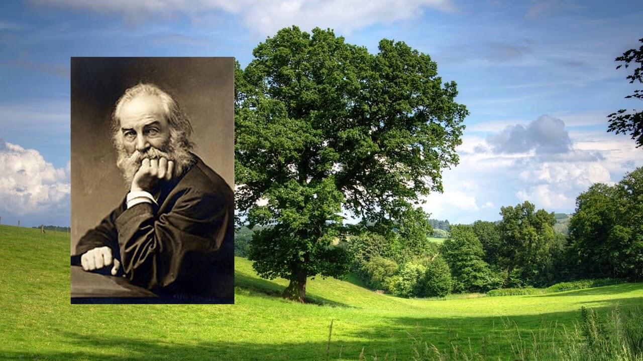 i saw in louisiana a live oak growing