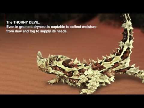 X-BIONIC® Technology: Thorny Devil