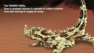 X-BIONIC® Technology: Thorny Devil