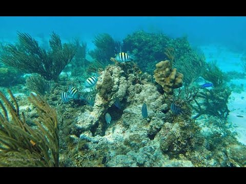 Stingray City and Snorkel excursions in Grand Cayman