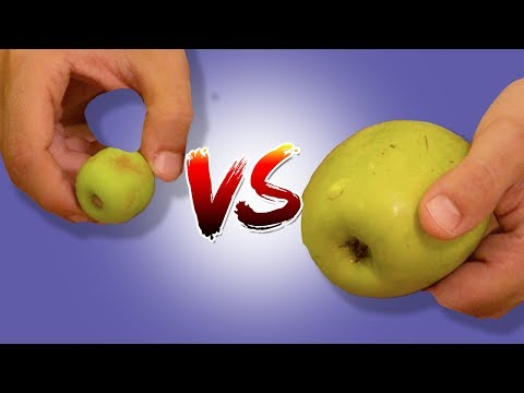 Gerçek Yiyecek VS. Jelibon Yiyecek Kapışması