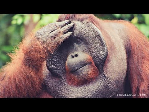 Palm Oil Problem - Behind the News