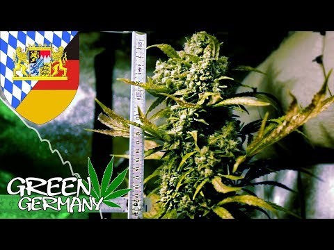HomeGrow - in BAYERN! | GreenGermany #11