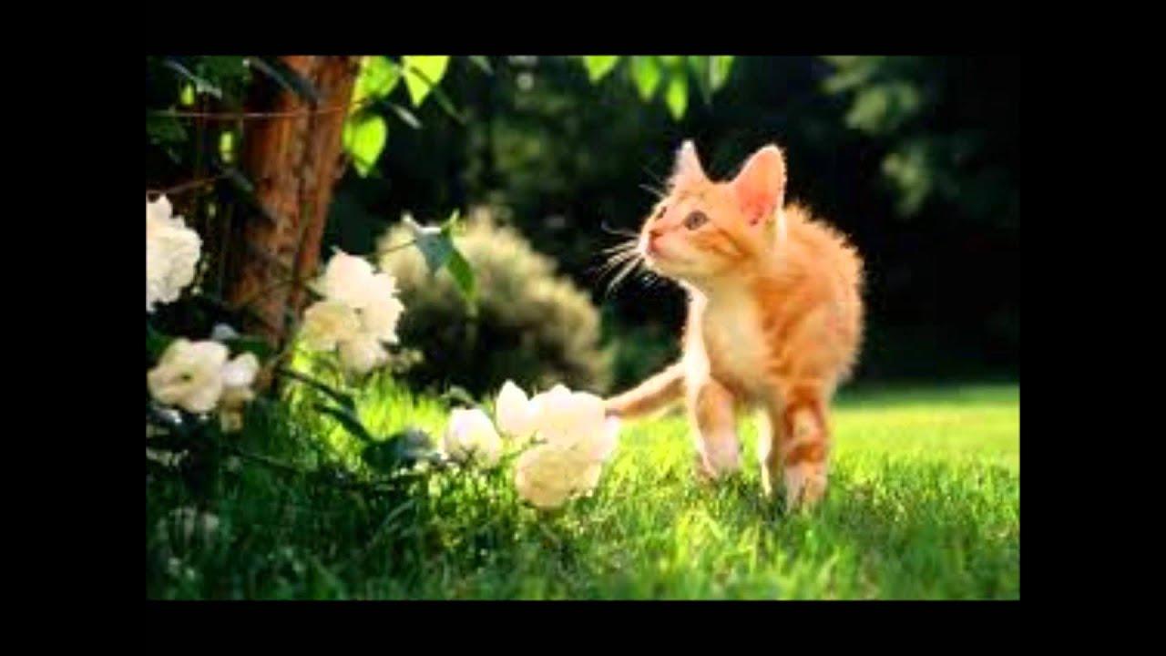 animales terrestres - YouTube