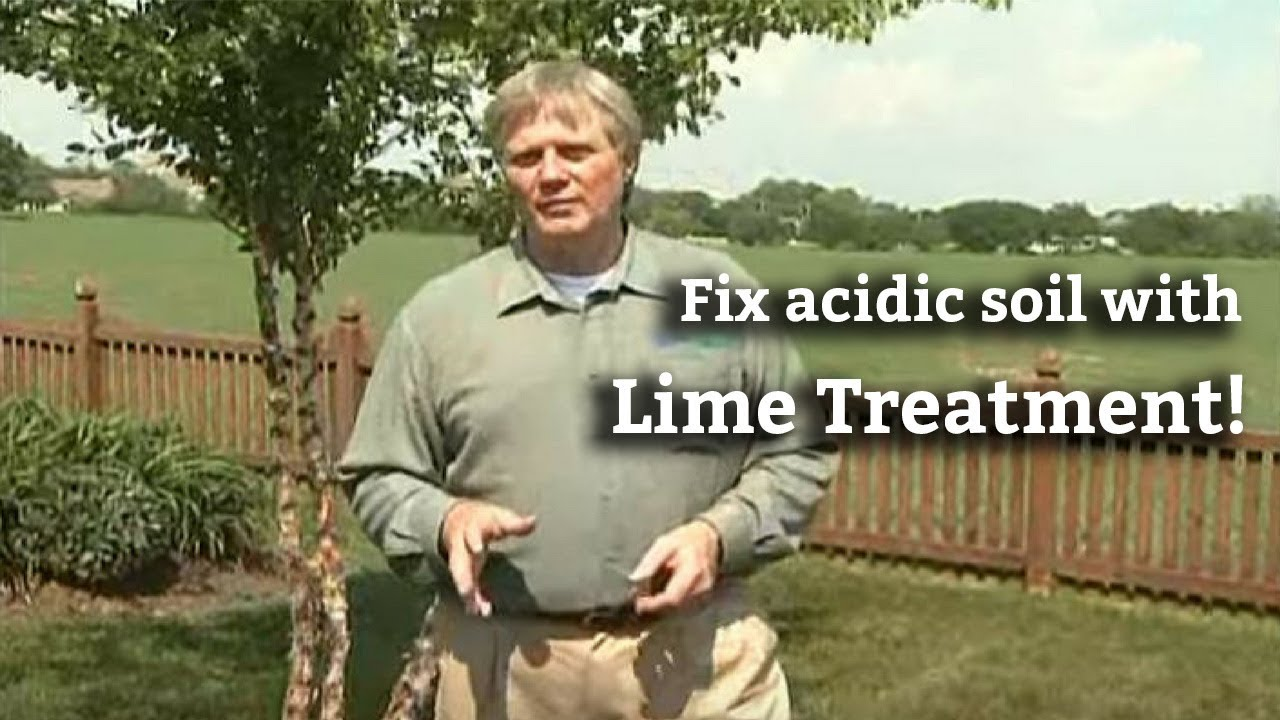 Applying Lime Treatments To Your Lawn Fixing Acidic