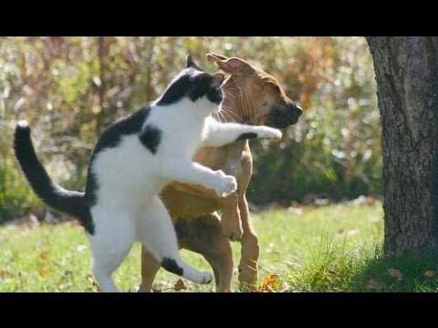 Cat vs dog!!(gatos vs perros)