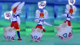 Pokemon Camp FUNNIEST MOMENTS - Pokemon Sword and Shield