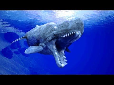 The World's Most Powerful Ocean Predator?