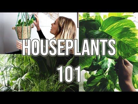 HOUSE PLANT CARE 101   BEGINNER HOUSEPLANTS + TIPS