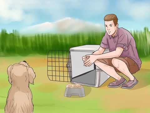How to Train Havanese Dogs