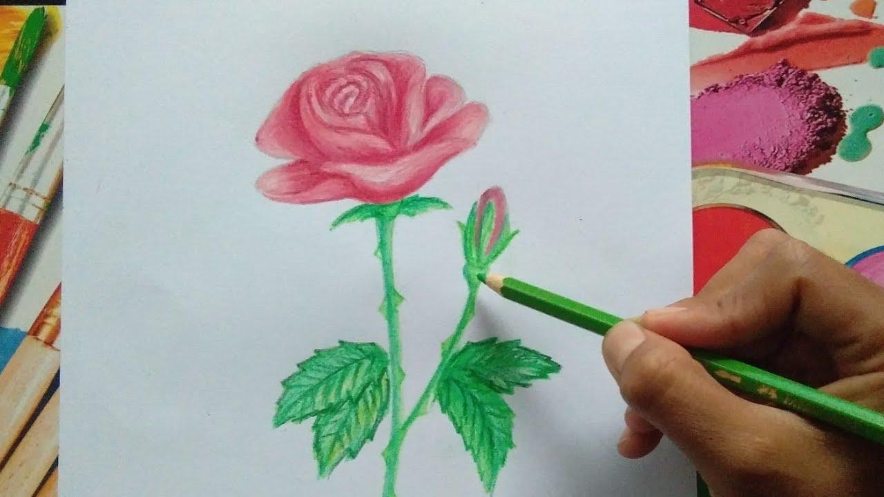 Cara Menggambar Bunga Mawar Dengan Pensil Warna Dunia Menggambar Youtube