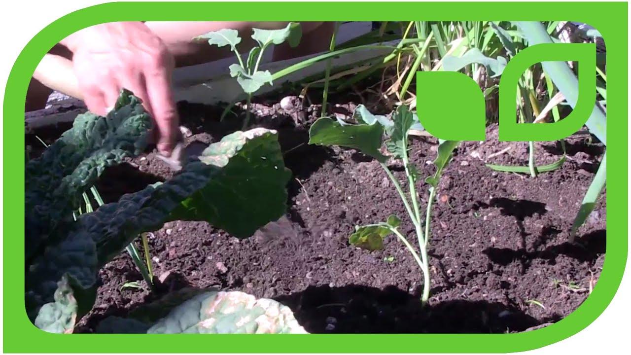 Sabine Rebers Gartentipp Gemuse Im Hochbeet Aussaen Youtube