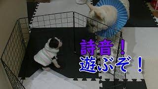 寒いので服を着せてみました! Nana&Goro+Shion 詩音キュ~ン!Shion cu...