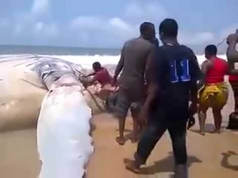 ---Big Whale Landed At Bar Beach In Lagos Nigeria - YouTube