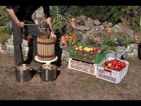 Gli straordinari effetti benefici dell'aceto di mele