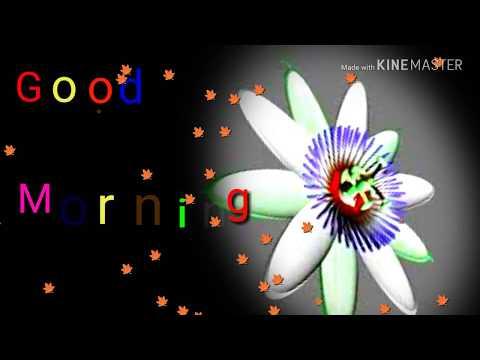 , Good morning whatsapp video... Beautiful good morning whatsapp video.. Bengali